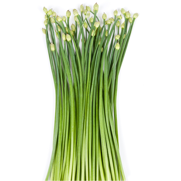Chinese Chives (Nir Grass)