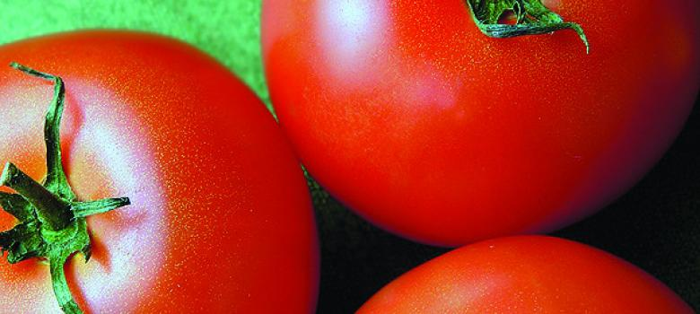 Mexican tomato growers challenge Commerce Department
