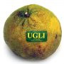 Uniq/Ugli Fruit