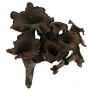 Black Chanterelle Mushrooms