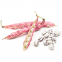 Cranberry Beans (Dried)