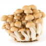 Hon Shimeji Mushrooms
